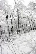 fairy snowy winter forest
