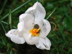 wonderful white flower with bee