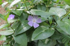 purple flowers under green leaves