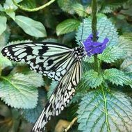 black and white butterfly on flower