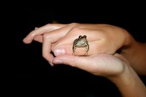 small cute frog