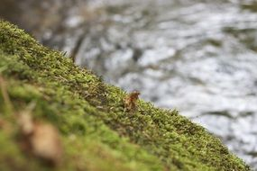 Macro photo of fresh moss in forest