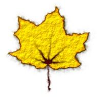 yellow leaf fall drawing