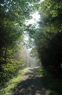 summer sun rays on a forest path