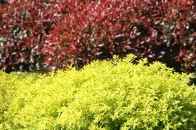 colorful garden bushes