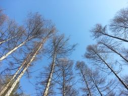 tree tops against the bright sky