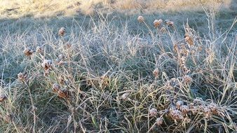 winter frost on the grass