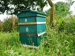 green hive in the garden