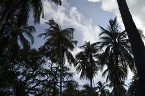 palm trees on an exotic island under white clouds