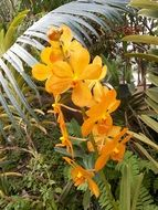 yellow orchids among tropical plants