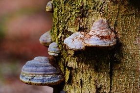tree mushrooms close-up