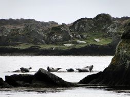 seals on a rocky shore