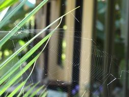 spider web in costa rica