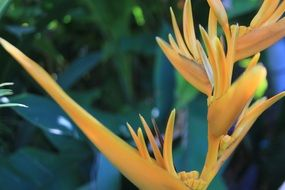 orange-yellow exotic flower