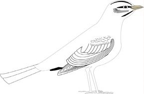 Drawing of the bird clipart