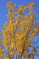 Autumn tree yellow sky nature