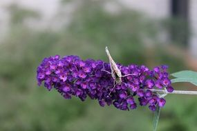 butterfly on elongated purple flower in nature