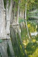 cypress trees are reflected in the river