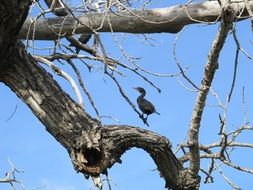 perched cormorant on the tree