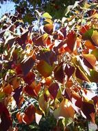 tree leaves autumn colored