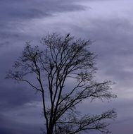 tree on a background of gloomy sky