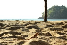 small lizard in sand thailand scenery