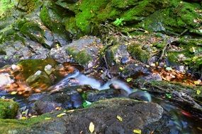 stream in green moss stones