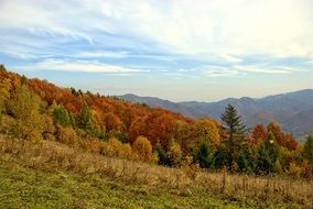 Poland Pieniny forest autumn