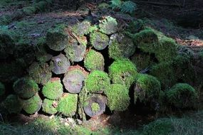 logs overgrown with moss