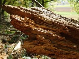 photo of a rotten tree trunk
