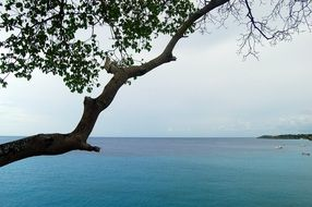 tree branch on the background of the ocean in Curacao