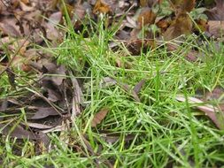 green grass among the dry leaves