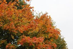 tree with green and orange leaves in autumn