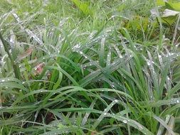 green grass with fresh raindrops