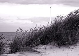 grass on the sand coast