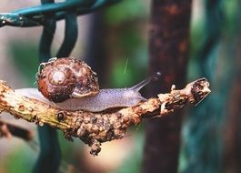 snail on the tree branch