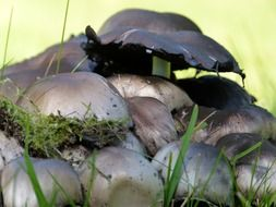 Wild mushrooms on grass