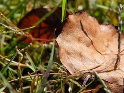 dry autumn leaves on green grass