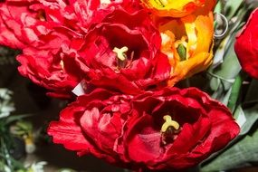 top view of red and yellow double tulips