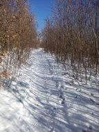 Path in the snowy forest