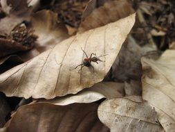 ant on dry foliage