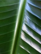 green leaf closer view