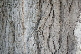 tree bark structure wood nature