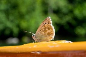 butterfly on orange surface