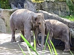 elephant couple in the zoo