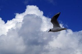 seagull against the cloudy sky