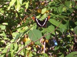 black white butterfly on a garden tree
