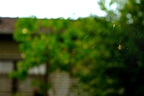 cobweb spider nature
