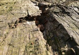 A weathered tree close up