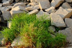green grass between rocks